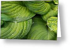Close-up Of Raindrop On Green Leaves Greeting Card
