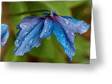 Close-up Of Raindrops On Blue Flowers Greeting Card