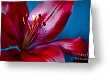 Close Up Of Red Lily Greeting Card