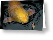 Close Up Of Single Large Yellow Koi Fish With Whiskers Greeting Card