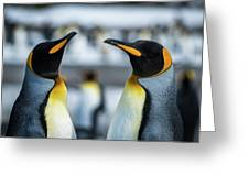 Close-up Of Two King Penguins In Colony Greeting Card