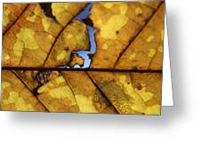 Close Up Of Yellow Leaf Greeting Card