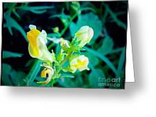 Close Up Of Yellow Wild Flowers Greeting Card