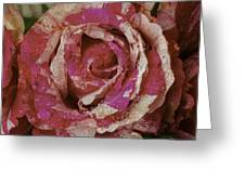Close Up Pink Red Rose Greeting Card