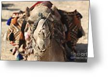 Close-up Portrait Of A Camel Greeting Card