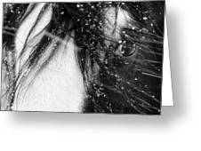 Close Up Portrait Of A Horse In Falling Snow Greeting Card