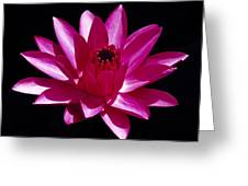 Close Up View Of A Red Water Lily Greeting Card