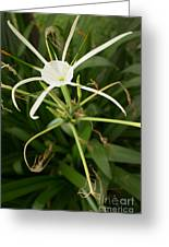Close Up White Asian Flower With Leafy Background, Vertical View Greeting Card