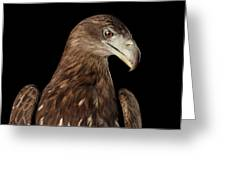 Close-up White-tailed Eagle, Birds Of Prey Isolated On Black Bac Greeting Card