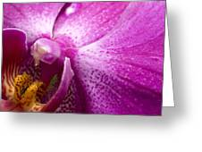Close View Of A Pink Orchid Blossom Greeting Card