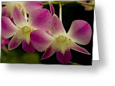 Close View Of A Pink Orchid Flowers Greeting Card