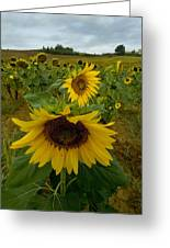 Close View Of A Sunflower At The Edge Greeting Card