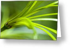Close View Of Green Flower Greeting Card
