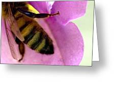 Close View Of Single Honey Bee Greeting Card
