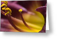 Close View Of Stamen Of A Flower Greeting Card