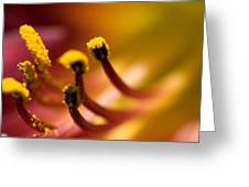 Close View Of The Stamen Of A Flower Greeting Card