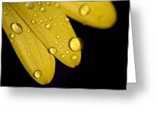 Close View Of Water Drops On The Petals Greeting Card
