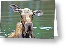 Close Wet Moose Greeting Card