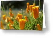 Closed California Poppies Greeting Card