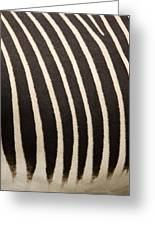 Closeup Of A Grevys Zebras Coat Equus Greeting Card