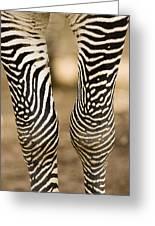 Closeup Of A Grevys Zebras Legs Equus Greeting Card