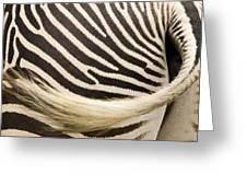 Closeup Of A Grevys Zebras Rear End Greeting Card