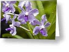 Closeup Of A Hybrid Cultivated Orchid Greeting Card