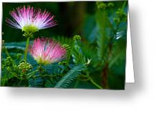 Closeup Of A Mimosa Bloom Greeting Card