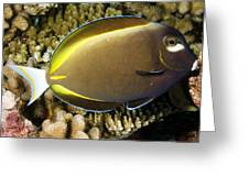 Closeup Of A Whitecheek Surgeonfish Greeting Card by Tim Laman