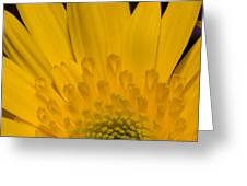 Closeup Of A Yellow Chrysanthemum Greeting Card