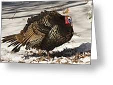 Closeup Of An Adult Male Wild Turkey Greeting Card