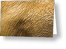 Closeup Of An African Elephant Greeting Card