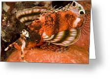 Closeup Of An Ocellated Lionfish Greeting Card