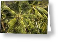 Closeup Of Coconut Palm Trees Greeting Card