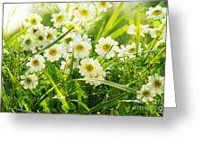 Closeup Of Daisies In Field Greeting Card