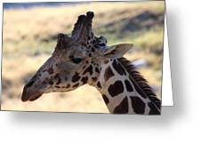 Closeup Of Giraffe Greeting Card