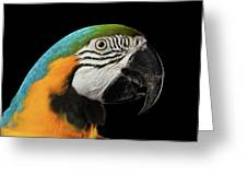 Closeup Portrait Of A Blue And Yellow Macaw Parrot Face Isolated On Black Background Greeting Card