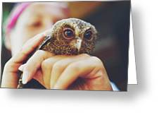 Closeup Portrait Of A Girl Holding And Tending A Small Baby Owl In Her Hands Greeting Card
