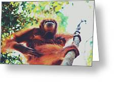 Closeup Portrait Of A Wild Sumatran Adult Female Orangutan Climbing Up The Tree And Holding A Baby Greeting Card