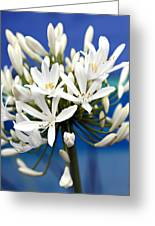 Closeup White Californian Flower Greeting Card