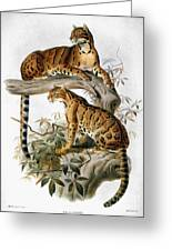 Clouded Leopard, 1883 Greeting Card