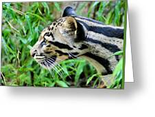 Clouded Leopard In The Grass Greeting Card