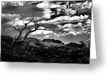 Clouds And A Tree Baw Greeting Card