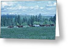Clouds And Horses Greeting Card