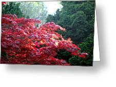 Clouds Of Leaves Greeting Card