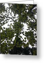 Cloudy Skies Through Maple Greeting Card