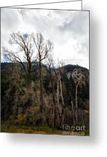 Cloudy Sky's Bare Trees Greeting Card
