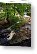 Cloughleagh Wood, Kilbride, Ireland Greeting Card