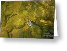 Clouser Smallmouth Greeting Card