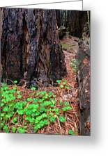 Clover And Redwood Greeting Card